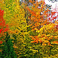 Autumn In Southwest Michigan by Ruth Hager