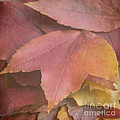 Autumn In Textures by Arlene Carmel