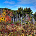 Autumn In The Adirondacks by David Patterson