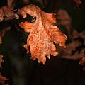 Autumn Is In The Air by Tom Mc Nemar