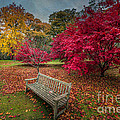 Autumn In The Park by Adrian Evans