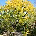 Autumn In The Park by Barbara Dean