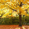 Autumn In The Park by Brian Mollenkopf