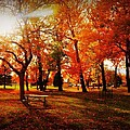 Autumn In The Park  by Stephanie Bernhardt
