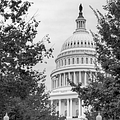 Autumn In The Us Capitol Bw by Susan Candelario