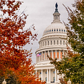 Autumn In The Us Capitol by Susan Candelario