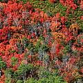 Autumn In The Wasatch Range by Richard Cheski