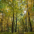 Autumn In Uw Arboretum In Madison Wisconsin by Natural Focal Point Photography