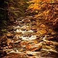 Autumn In Vermont by Priscilla Burgers