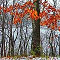Autumn In Winter by Julie Dant