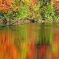 Autumn Iridescence by Ann Horn