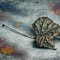 Autumn Is Around The Corner by Jutta Maria Pusl