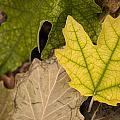 Autumn Is Coming 1 by Pedro Cardona Llambias
