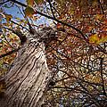 Autumn Is Here by Amanda Devitt