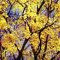Autumn by Justyna JBJart