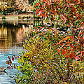 Autumn Lake And Swan by Mike Nellums