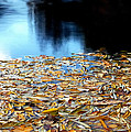 Autumn Lake by Steven Milner