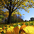 Autumn Landscape by Elena Elisseeva