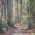 Autumn Lane by Bonita Ash