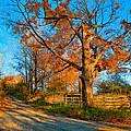 Autumn Lane Mpasto by Steve Harrington