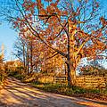 Autumn Lane by Steve Harrington