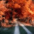 Autumn Lane by Tom Mc Nemar