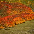 Autumn Lava Flow by Jeremy Rhoades