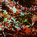 Autumn Leaf Abstract by David Pringle