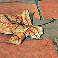 Autumn Leaf by Alice Gipson
