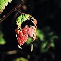 Autumn Leaf by Cathy Mahnke