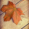Autumn Leaf by Amanda Elwell