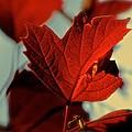 Autumn Leaf by Debbie Nobile