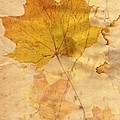 Autumn Leaf In Grunge Style by Michal Boubin