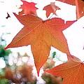 Autumn Leaf by Karen Silvestri