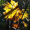 Autumn Leaf by Lesley DeHaan