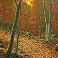 Autumn Leaf Litter by Frank Wilson