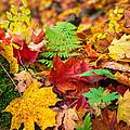 Autumn Leaf Salad by Bill Pevlor