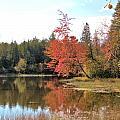 Autumn Leaning Tree by Valerie Kirkwood