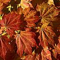Autumn Leaves 00 by Ron Harpham
