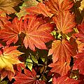 Autumn Leaves 01 by Ron Harpham