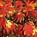 Autumn Leaves 08 by Ron Harpham