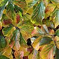Autumn Leaves 79 by Ron Harpham