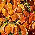 Autumn Leaves 82 by Ron Harpham