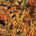 Autumn Leaves 83 by Ron Harpham