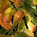 Autumn Leaves 91 by Ron Harpham