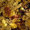 Autumn Leaves 94 by Ron Harpham