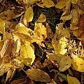 Autumn Leaves 95 by Ron Harpham