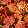 Autumn Leaves 98 by Ron Harpham