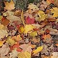 Autumn Leaves by Ann Horn
