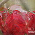 Autumn Leaves Blank Greeting Card by Debbie Portwood